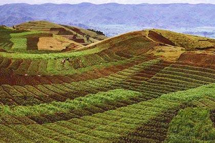 Agriculture in the Republic of Rwanda
